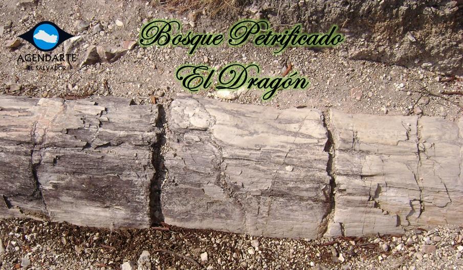bosque petrificado cerro el dragon