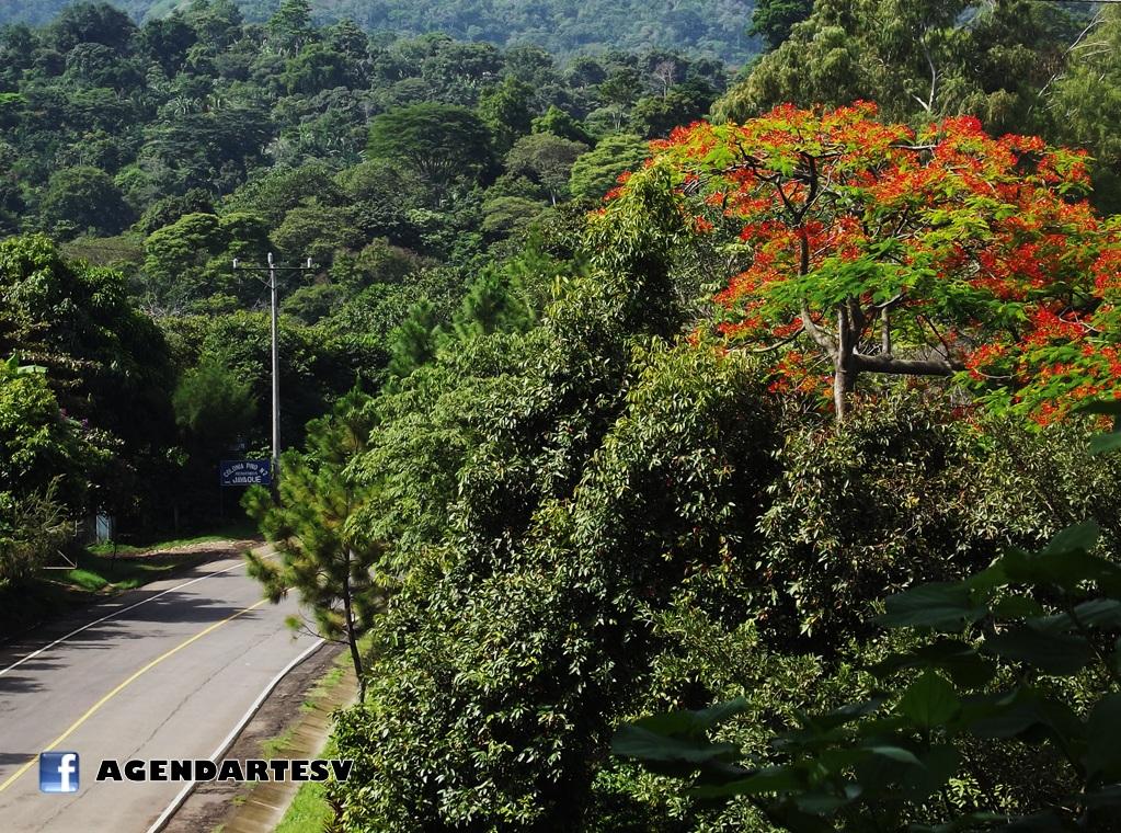 Jayaque carretera
