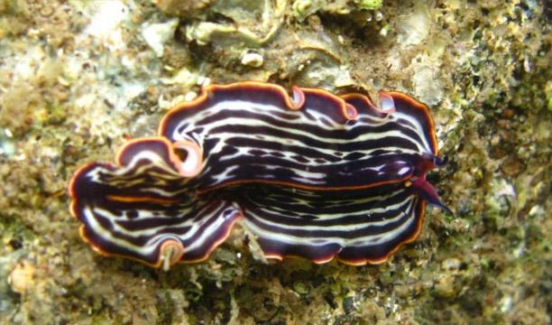 especie-gusanos