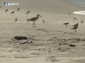 Aves de la Playa, Costa del Sol, La Paz, El Salvador