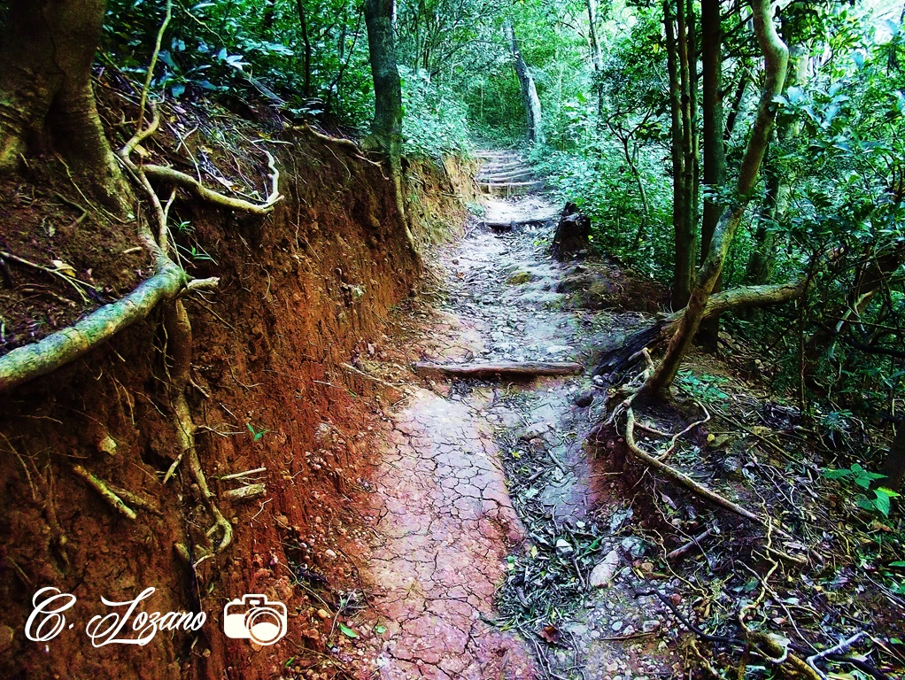 Bosque Nacional El Imposible,senderos