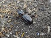 Escarabajo, Cihuatan, Aguilares, El Salvador