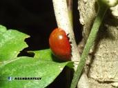 Insecto, Casas de Teja, Metepan, Santa Ana