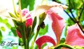Insecto, Cinquera, Cabañas, El Salvador