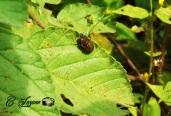 Insecto, El Bario, Suchitoto, El Salvador