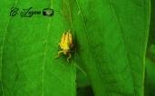Insecto, El Bario, Suchitoto