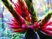 Insecto, El Imposible, Ahuachapan