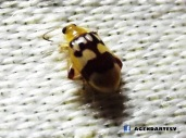 Insecto en Ayutuxtepeque, SS