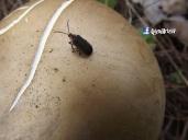 Insecto en Volcan de San Salvador, El Salvador