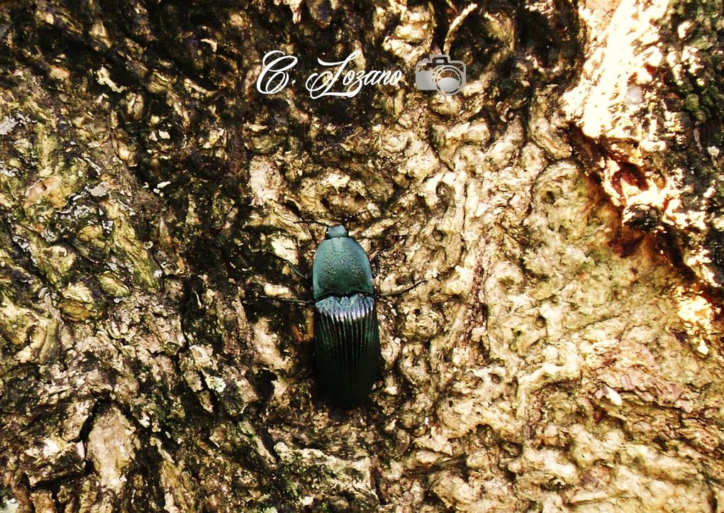 Insecto, La Argentina, El Playon, San Juan Opico
