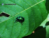 Insecto, Las Chinamas, Ahuachapan
