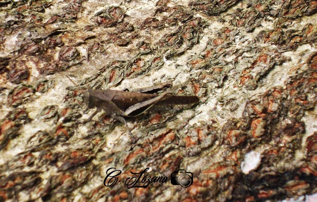 Insecto, Las Vueltas, Chalatenango