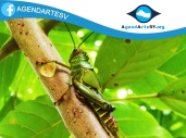 Insecto, Parque Bicentenario, El Salvador
