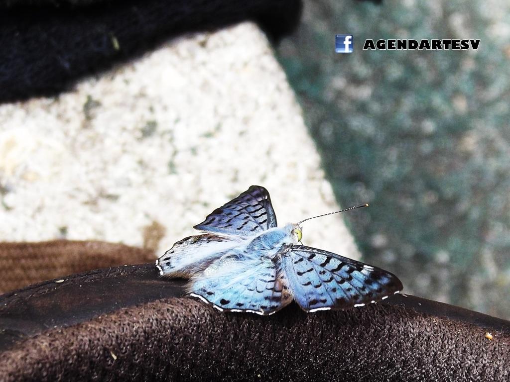 Insecto, Parque Nacional San Diego-La-Barra, Metapan