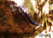 Insecto, Planes de Renderos, San Salvador