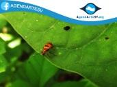 Insecto, San Francisco Morazan, Chalatenango, El Salvador