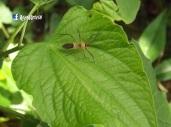 Insecto, San Francisco Morazan, Chalatenango