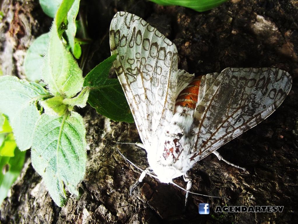 Insecto, Talnique, La Libertad