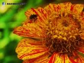 Insecto y Flor, Las Chinamas, Ahuachapan