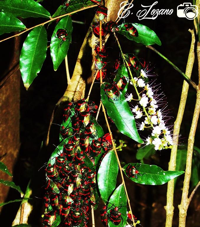Insectos, El Imposible, Ahuachapan