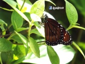 Mariposa 2, Las Chinamas, Ahuchapan, El Salvador