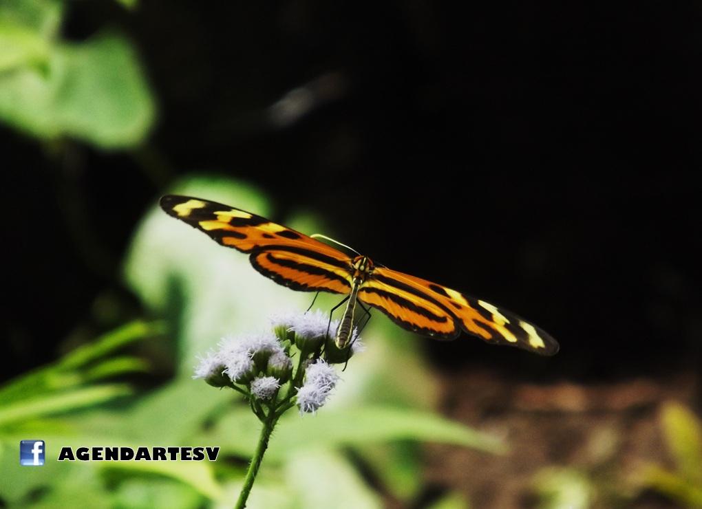 Mariposa, San Andres, La Libertad