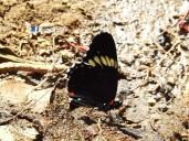 Mariposa, Las Chinamas, Ahuachapan, El Salvador