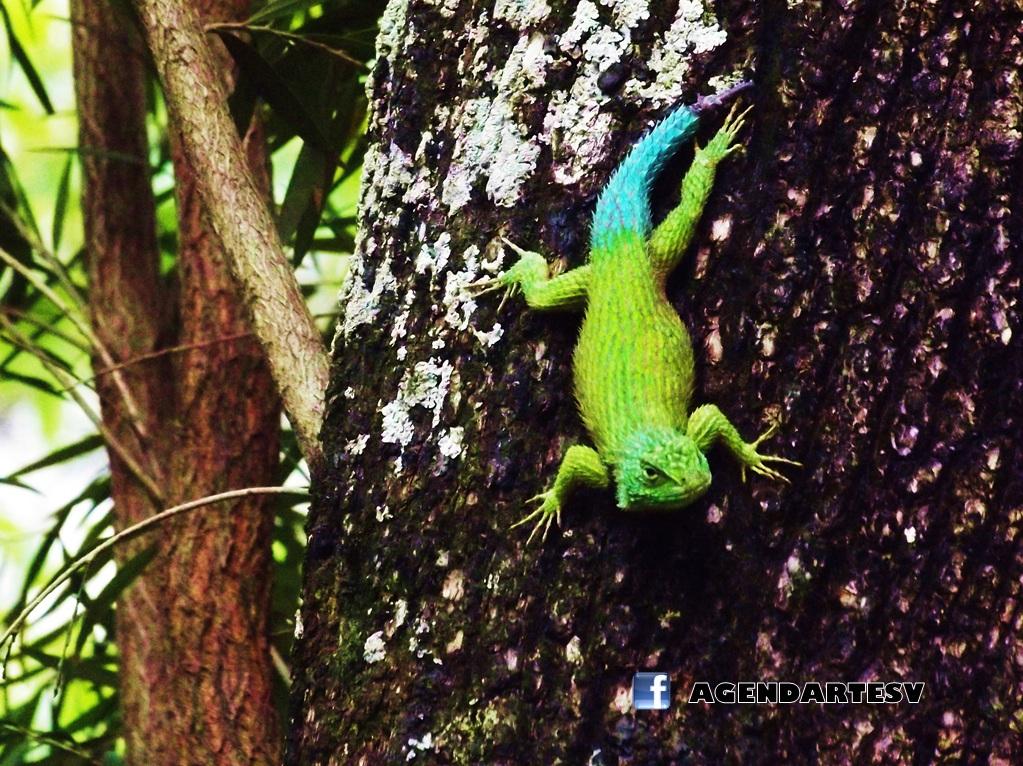 Reptil en UES, San Salvador