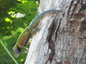 Reptil, Las Chinamas, Ahuachapan, El Salvador