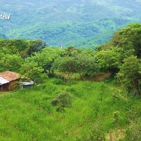 Teosinte, San Francisco Morazan, Chalatenango, El Salvador
