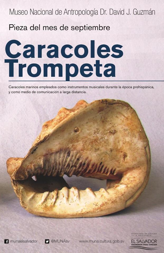 caracoles trompeta