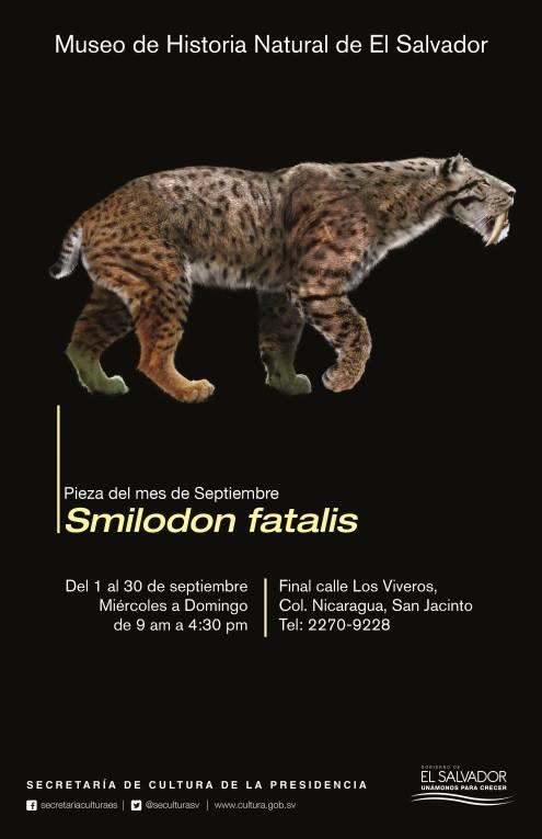 smilodon fatalis 1
