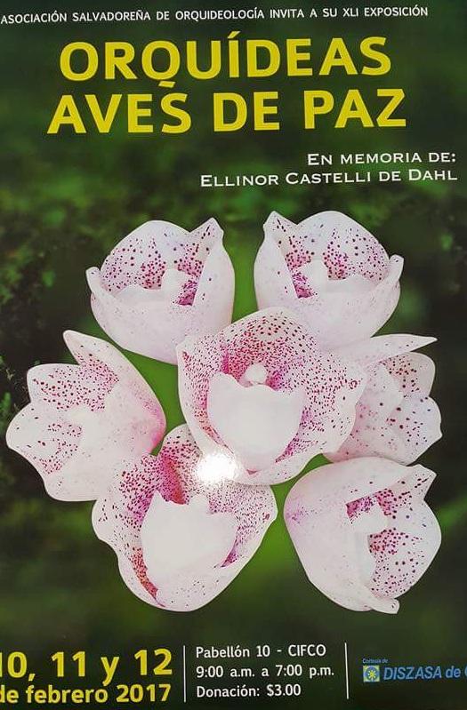 orquideas-aves-de-paz